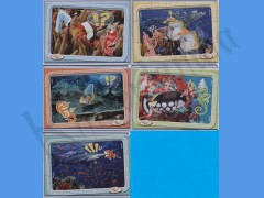 Animali marini TT